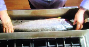 salmonpoche12.jpg